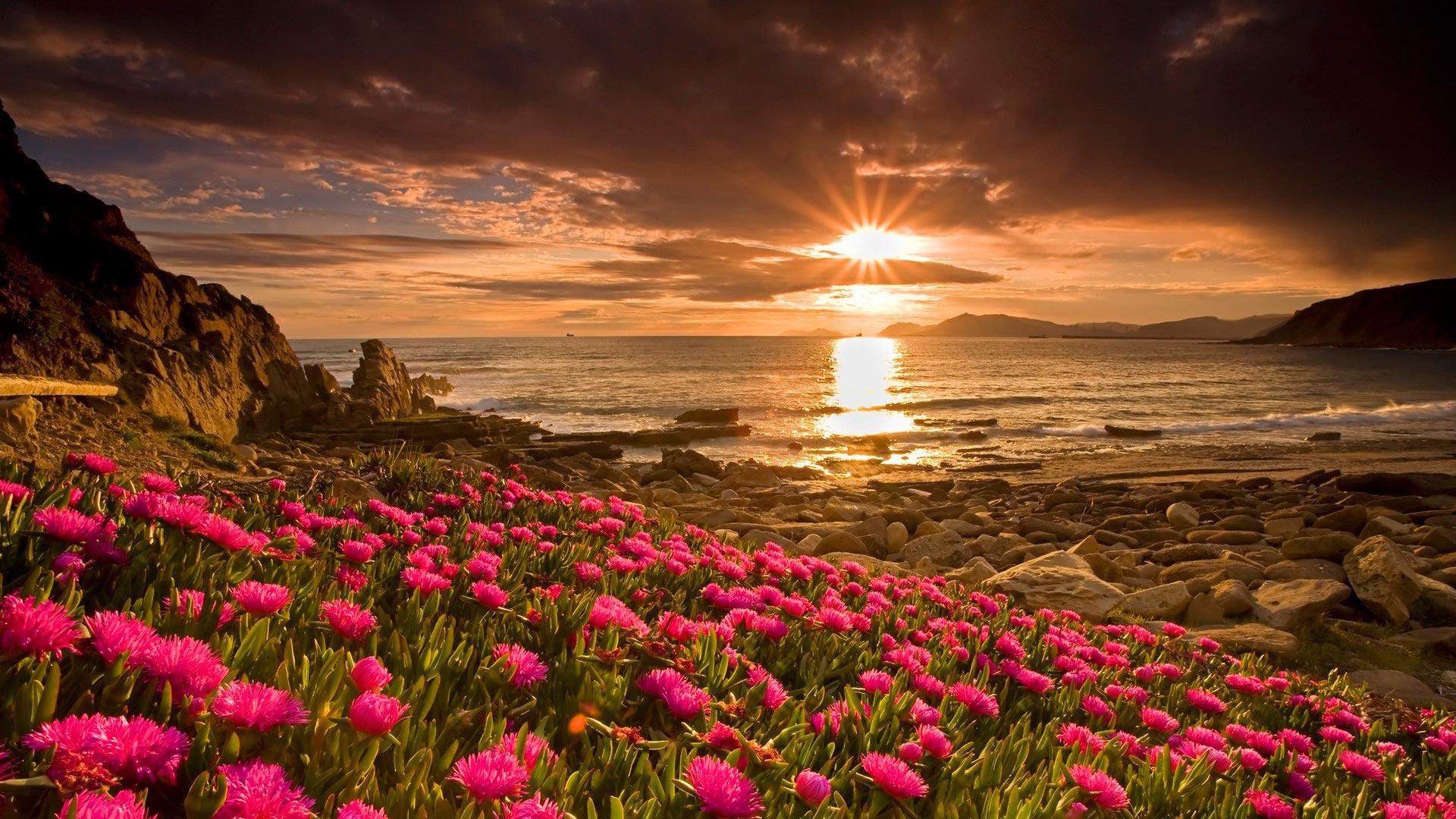 Фото цветов в full hd