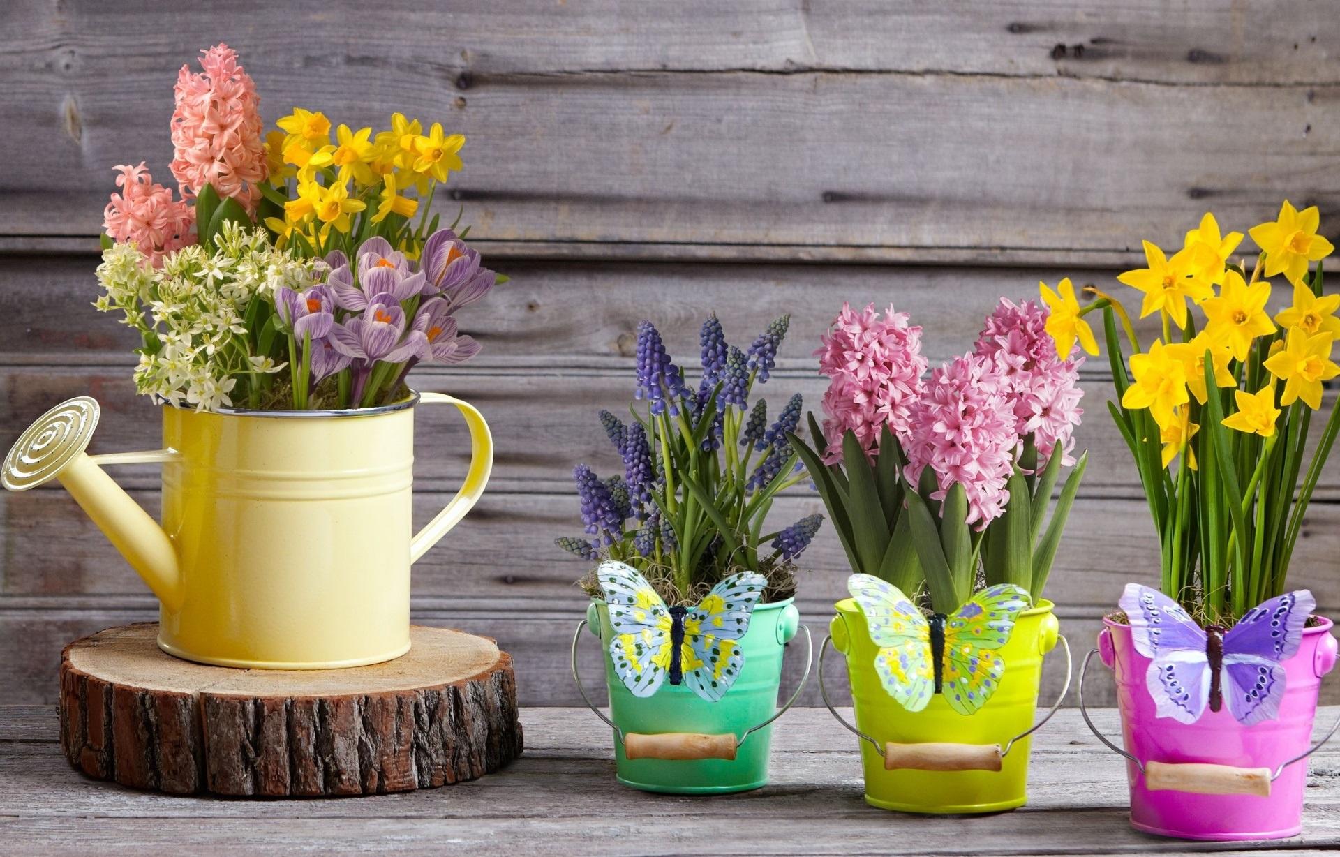 природа цветы ведро  № 464555 бесплатно
