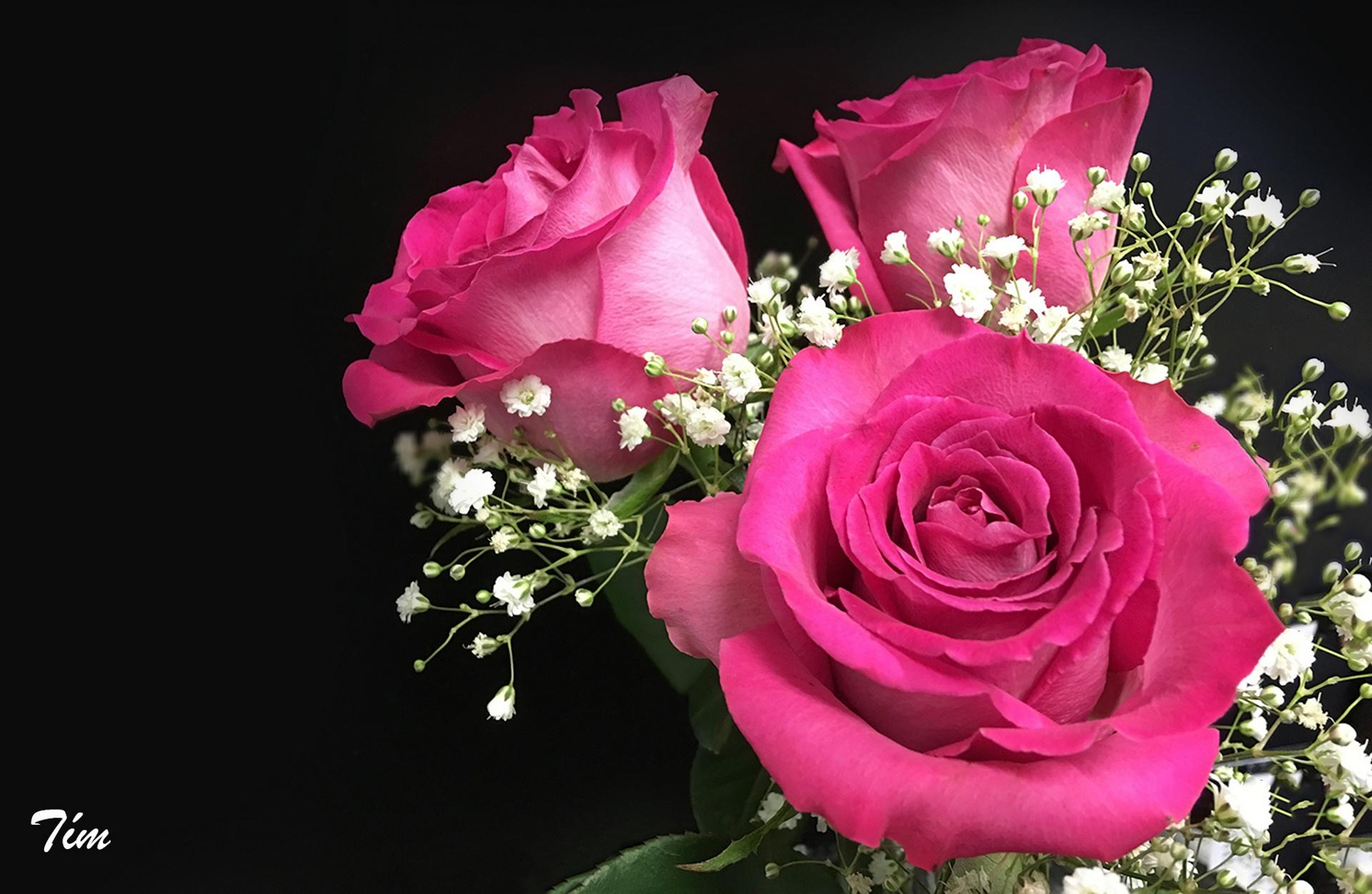 розы,желтые,букет,гипсофила,бутоны  № 761807 загрузить