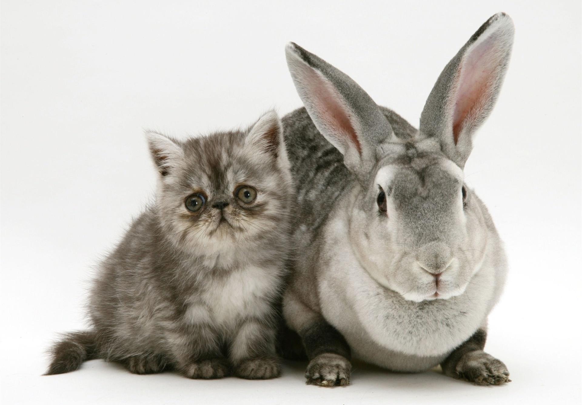 Картинки про зайцев и котов, раскладушка скрапбукинг