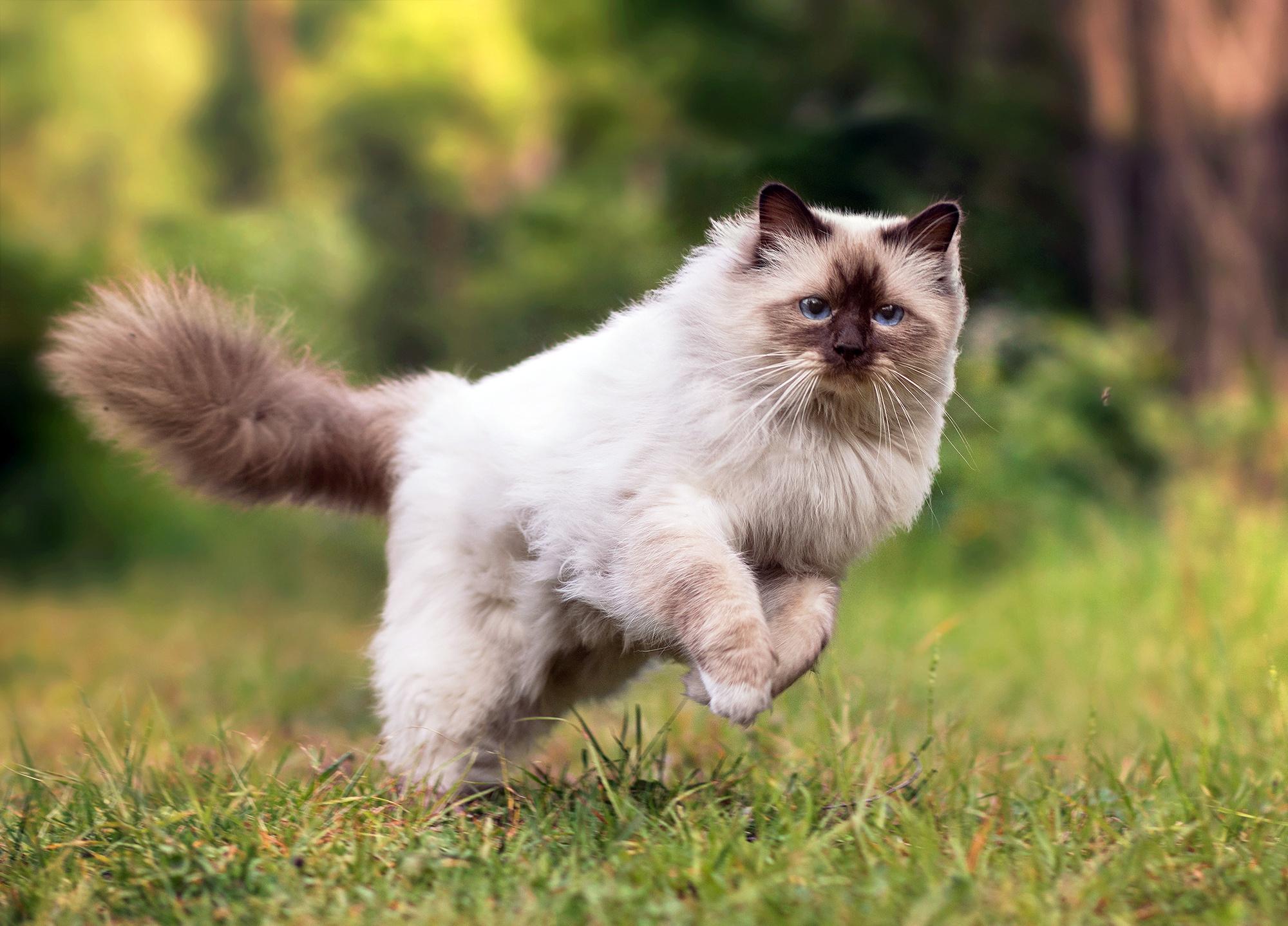 Дымчатый кот в траве  № 252453 без смс
