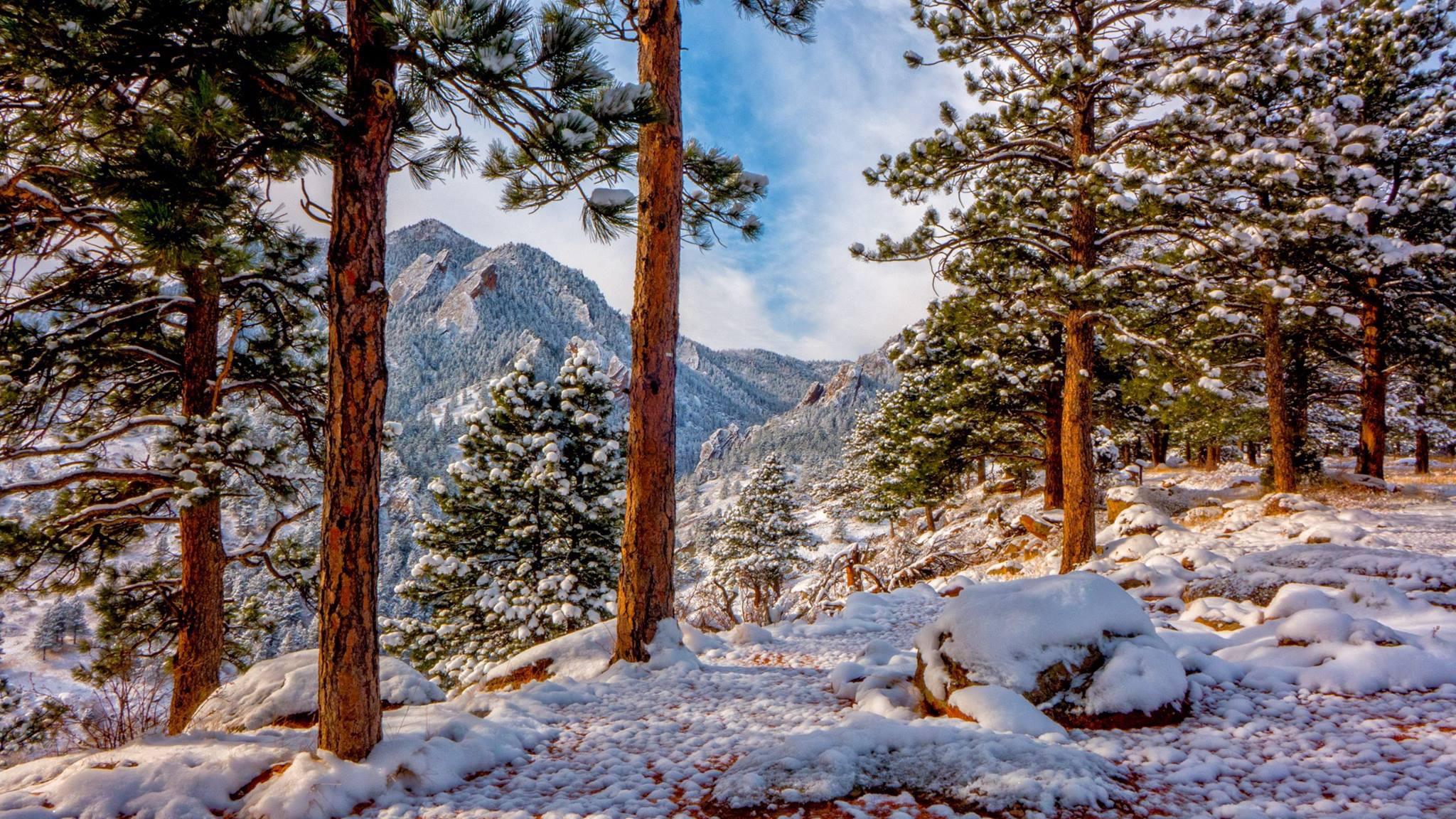 заснеженные деревья в горах  № 355846 загрузить