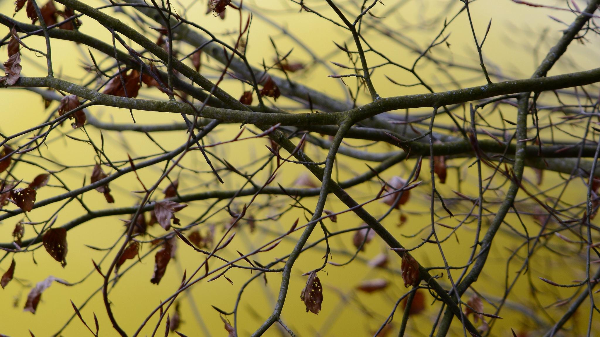 природа деревья ветки листья nature trees branches leaves  № 1275103 бесплатно