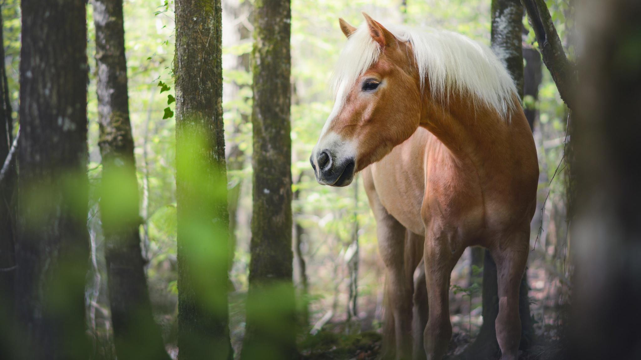 лошадь конь лес поляна  № 99056 бесплатно