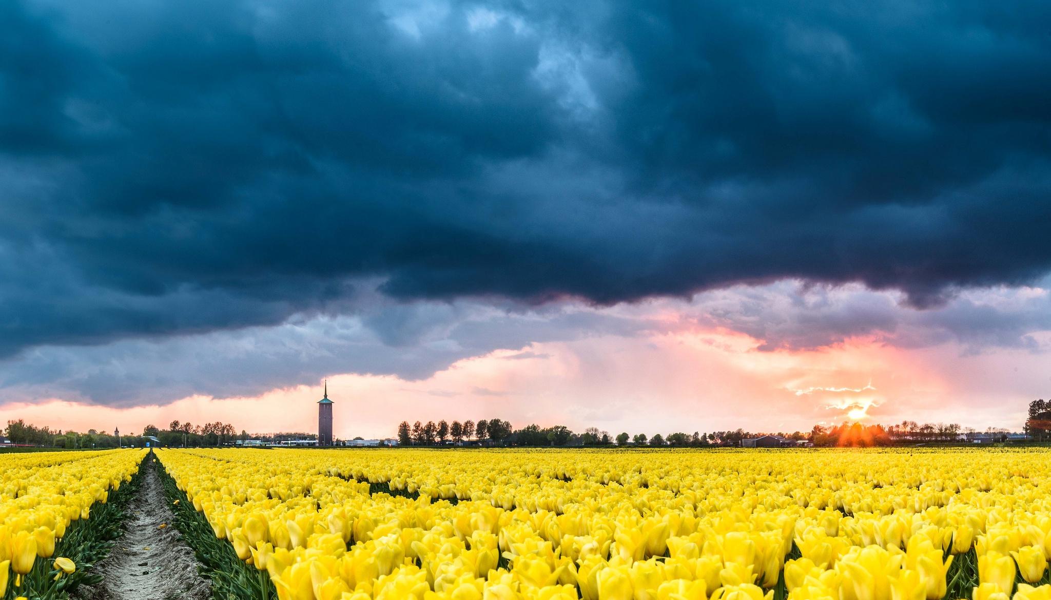 архитектура страны цветы тюльпаны желтые пейзаж  № 2568568 бесплатно