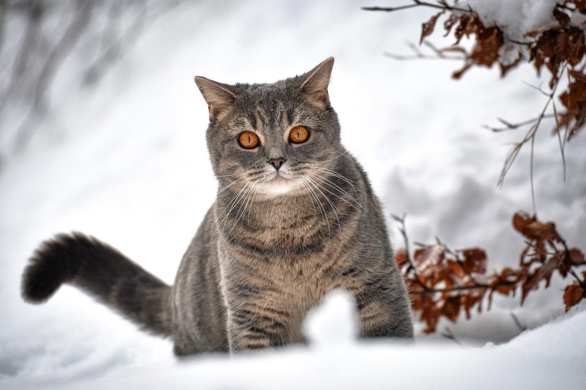 Кот на ветке  № 1118363 загрузить