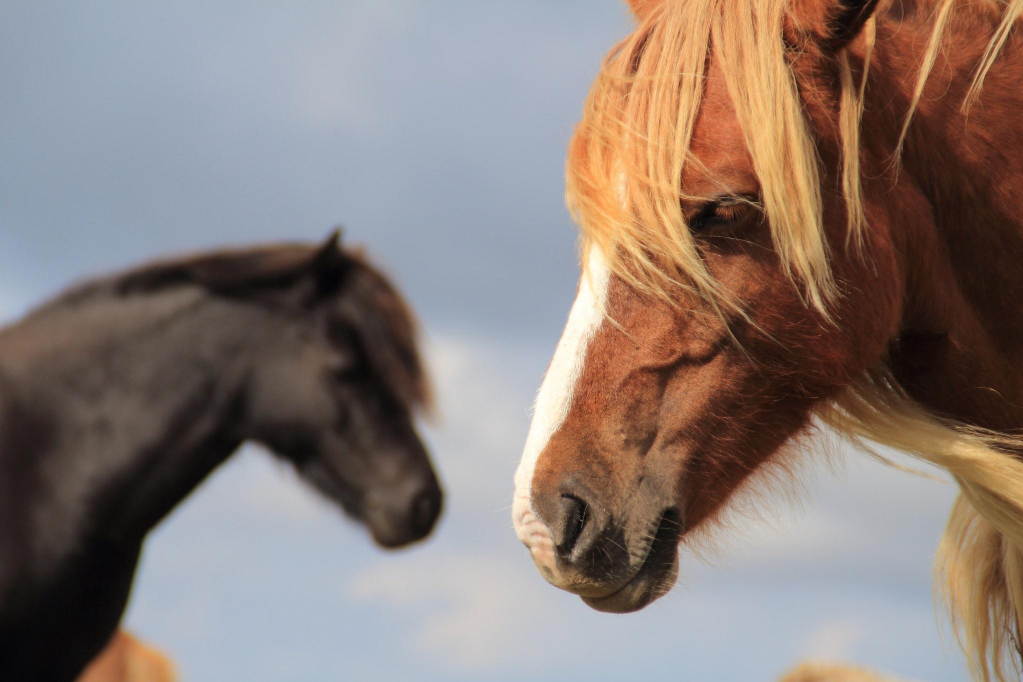 лошадь с гривой  № 3127207  скачать