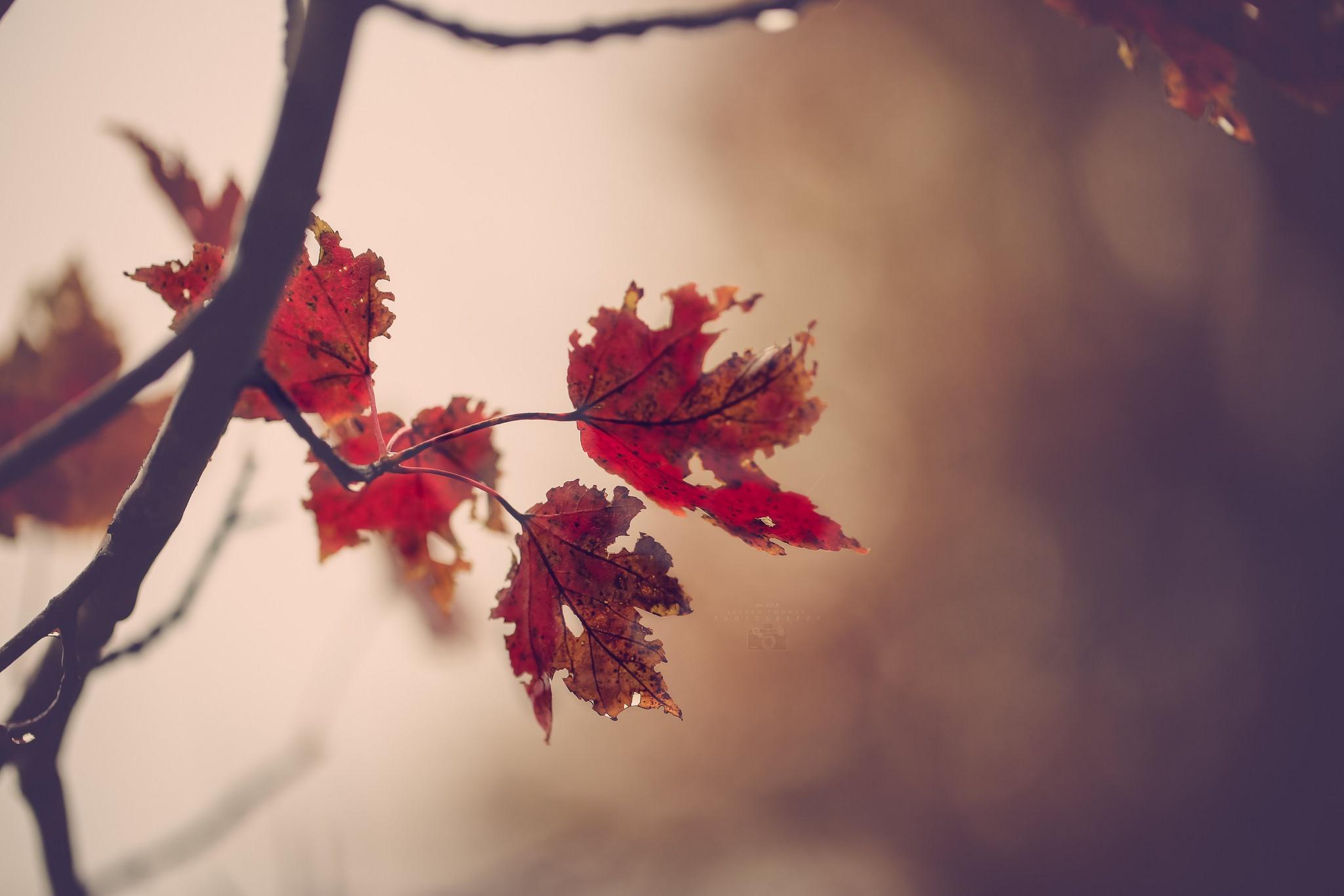 природа ветка листья nature branch leaves  № 2242 без смс