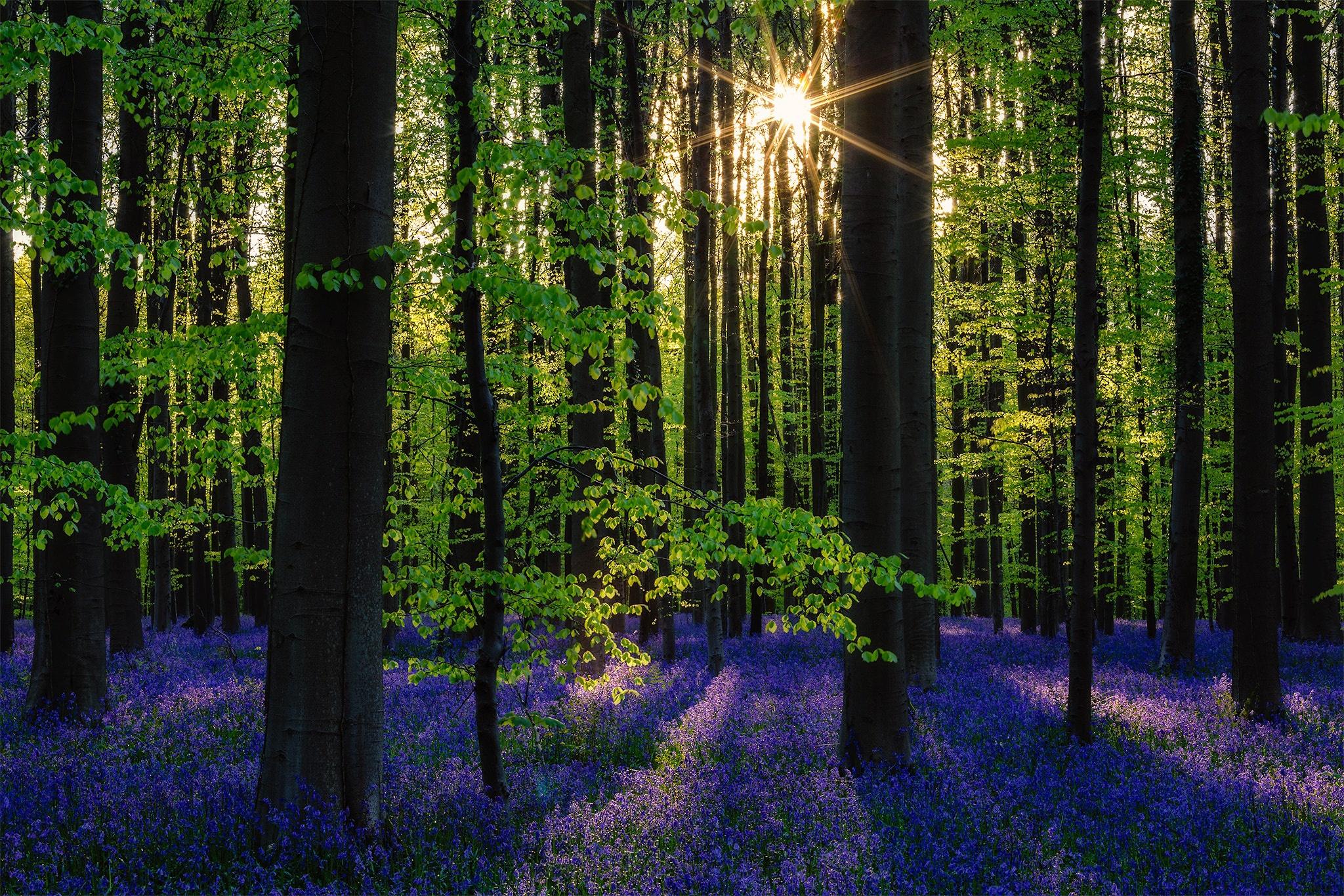 весной в лесу  № 113945 загрузить
