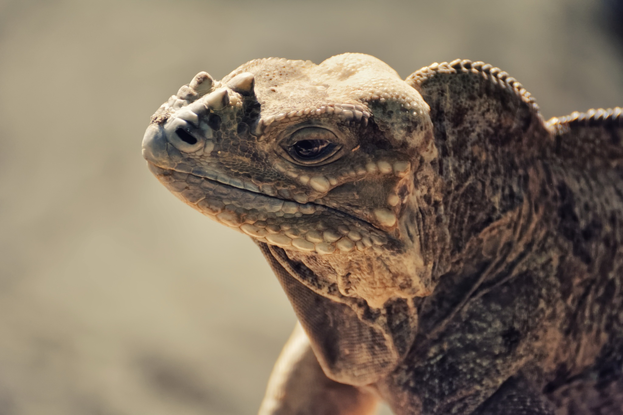 природа животные рептилия  № 234983 загрузить