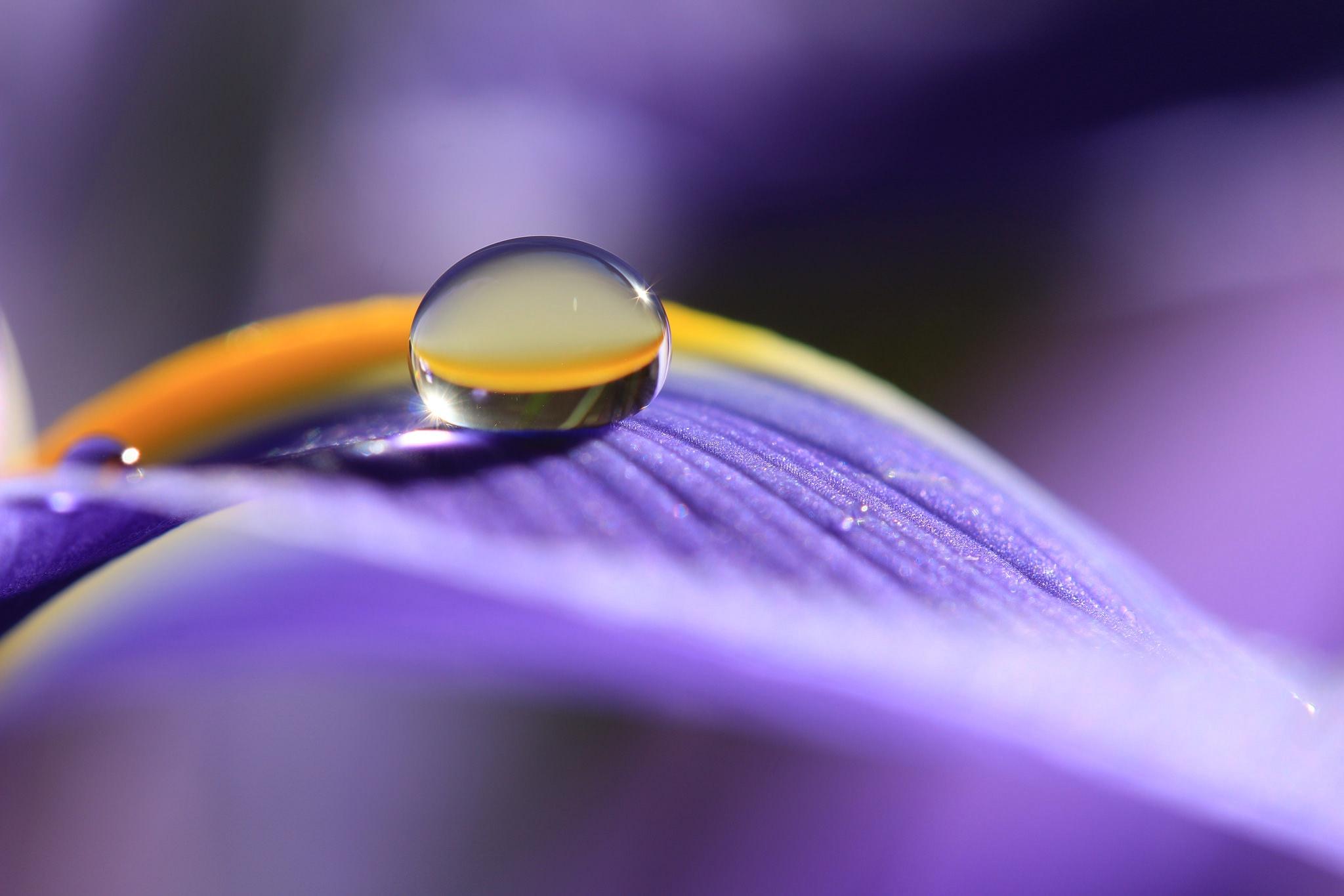 Круглая капля на лепестке цветка  № 3234327 бесплатно