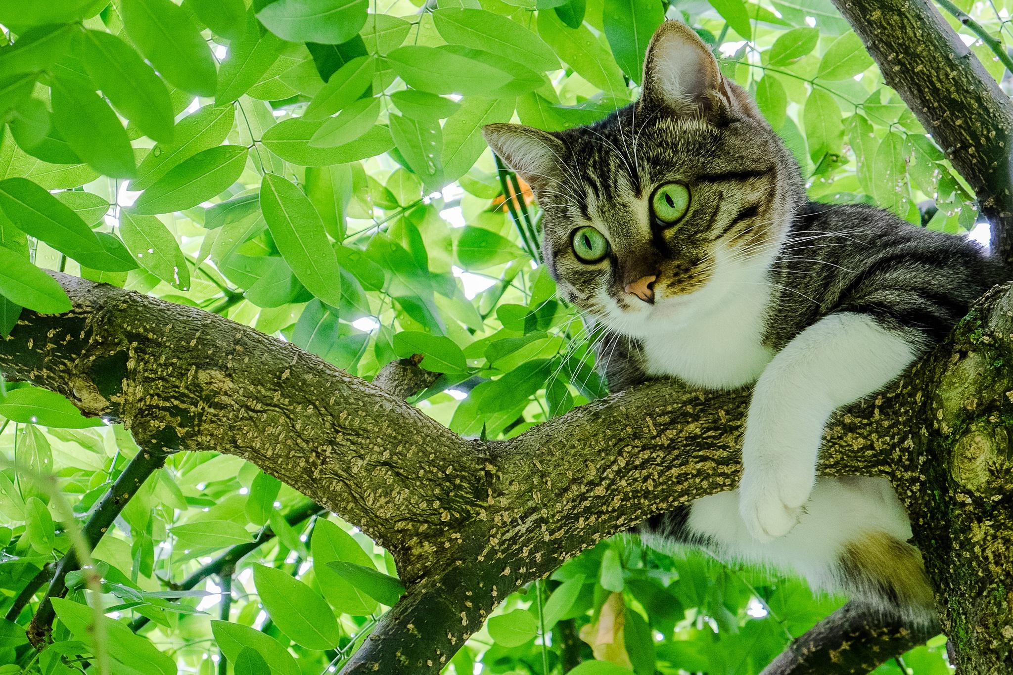 Кот на ветке  № 1118397 без смс