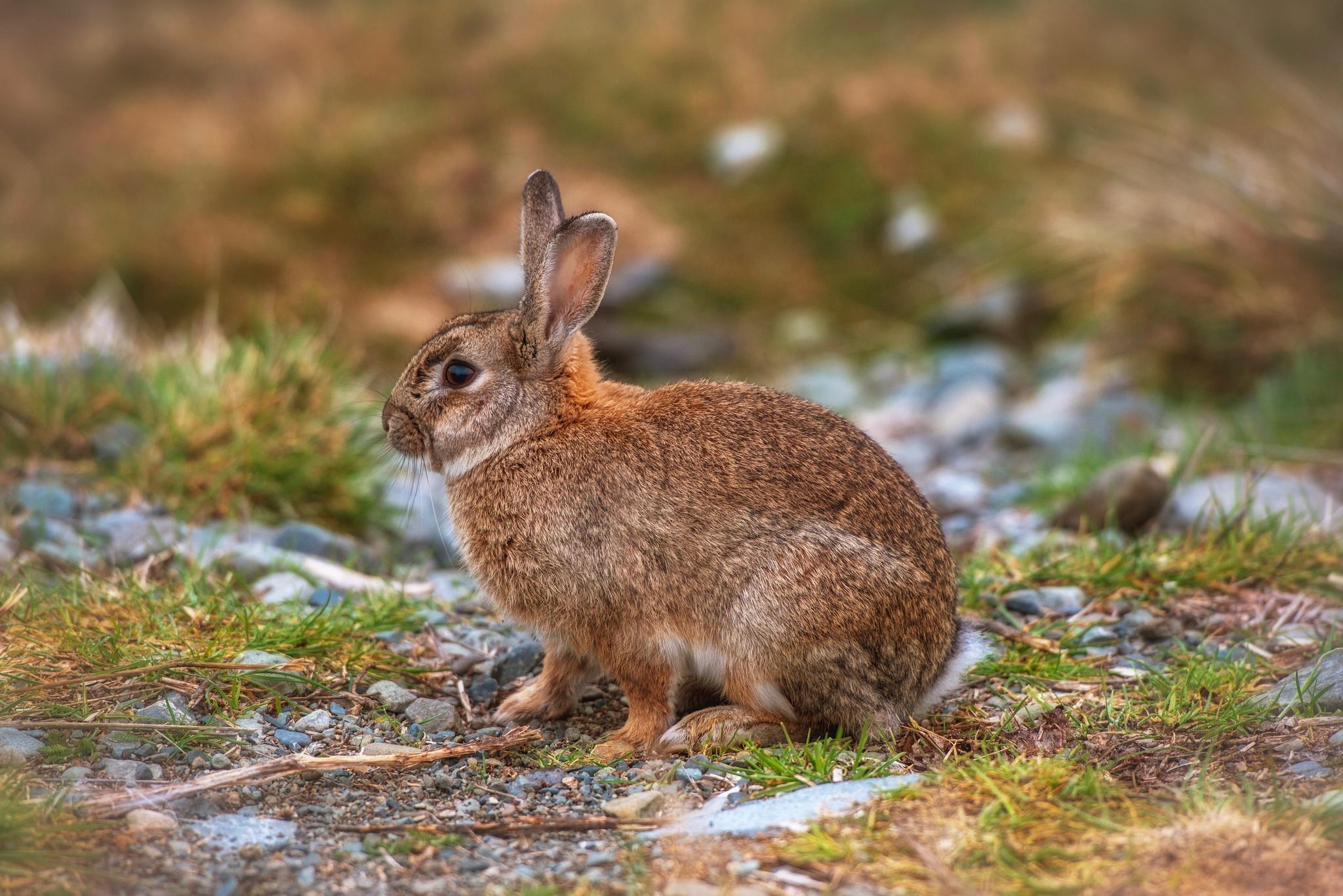 природа животные заяц nature animals hare  № 103252 без смс