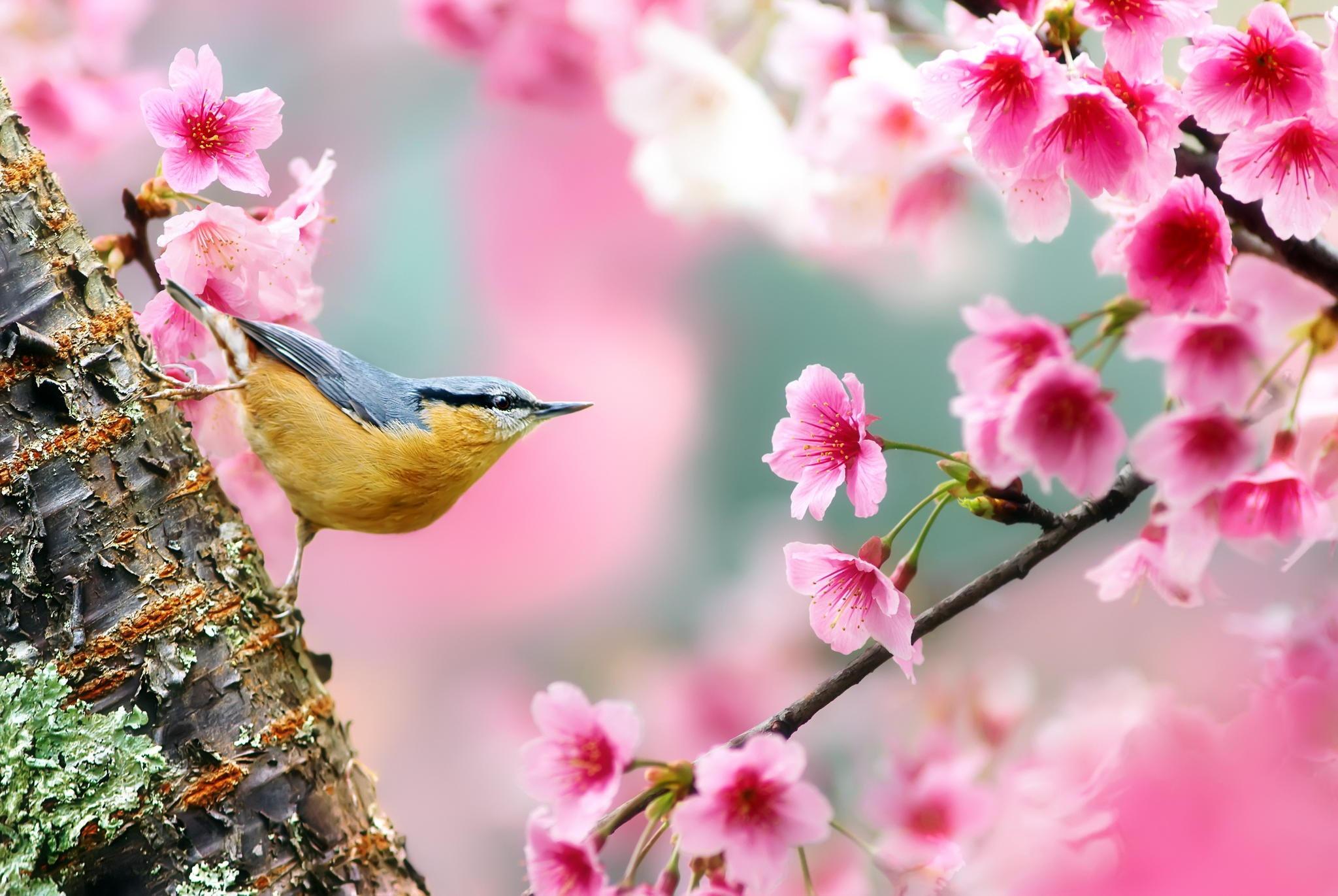природа птицы животные весна  № 290813 бесплатно