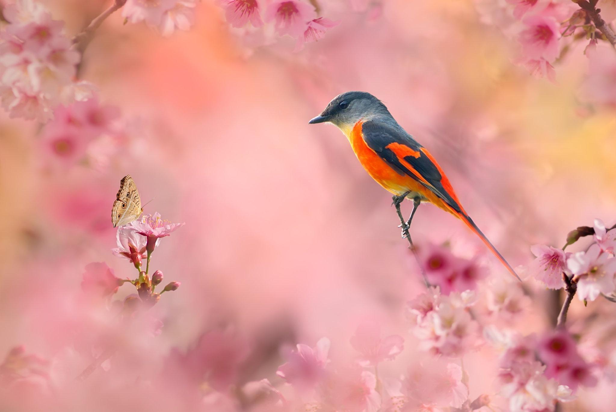 природа птицы животные весна  № 290695 без смс