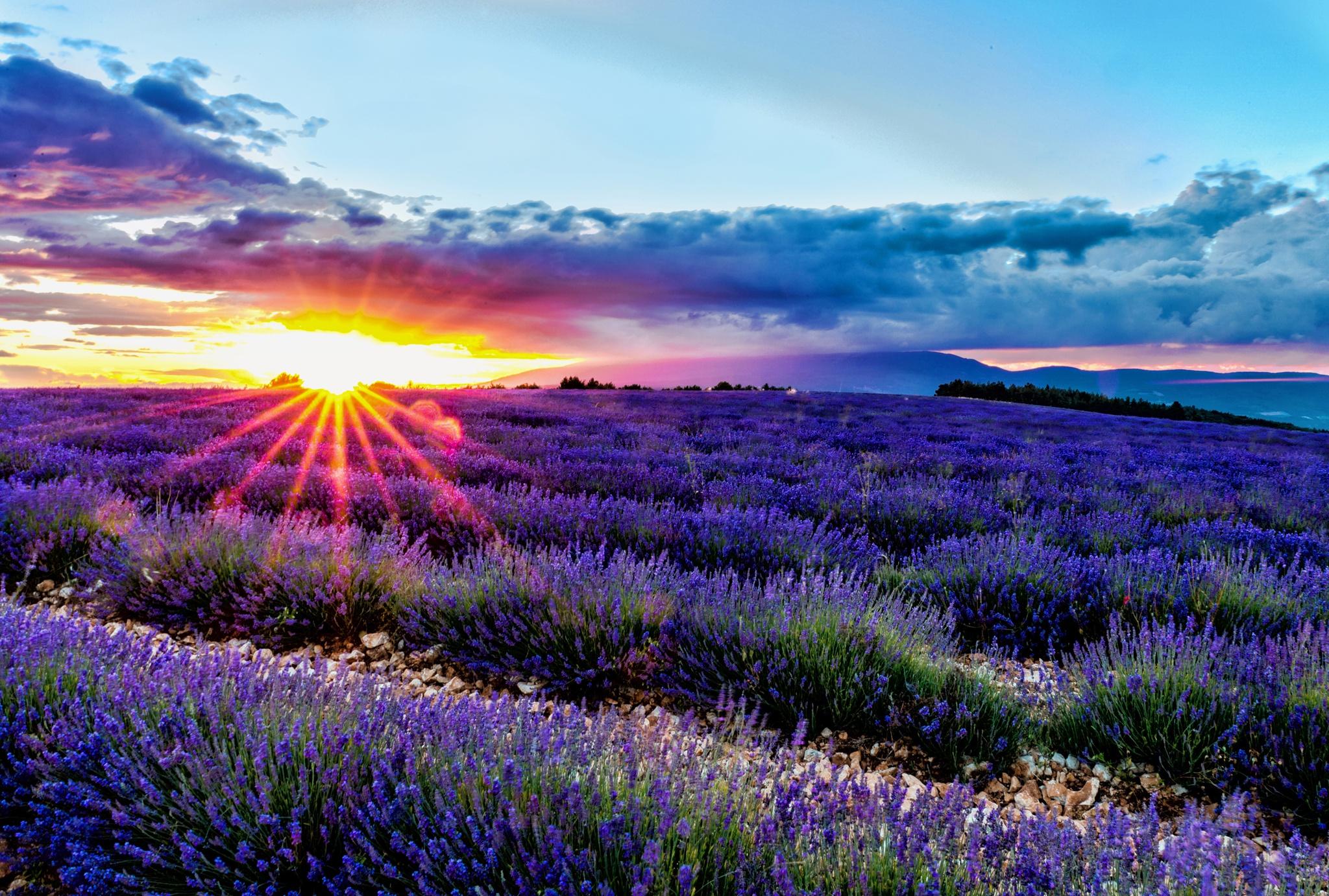 поле цветы рассвет field flowers dawn  № 3837103 бесплатно