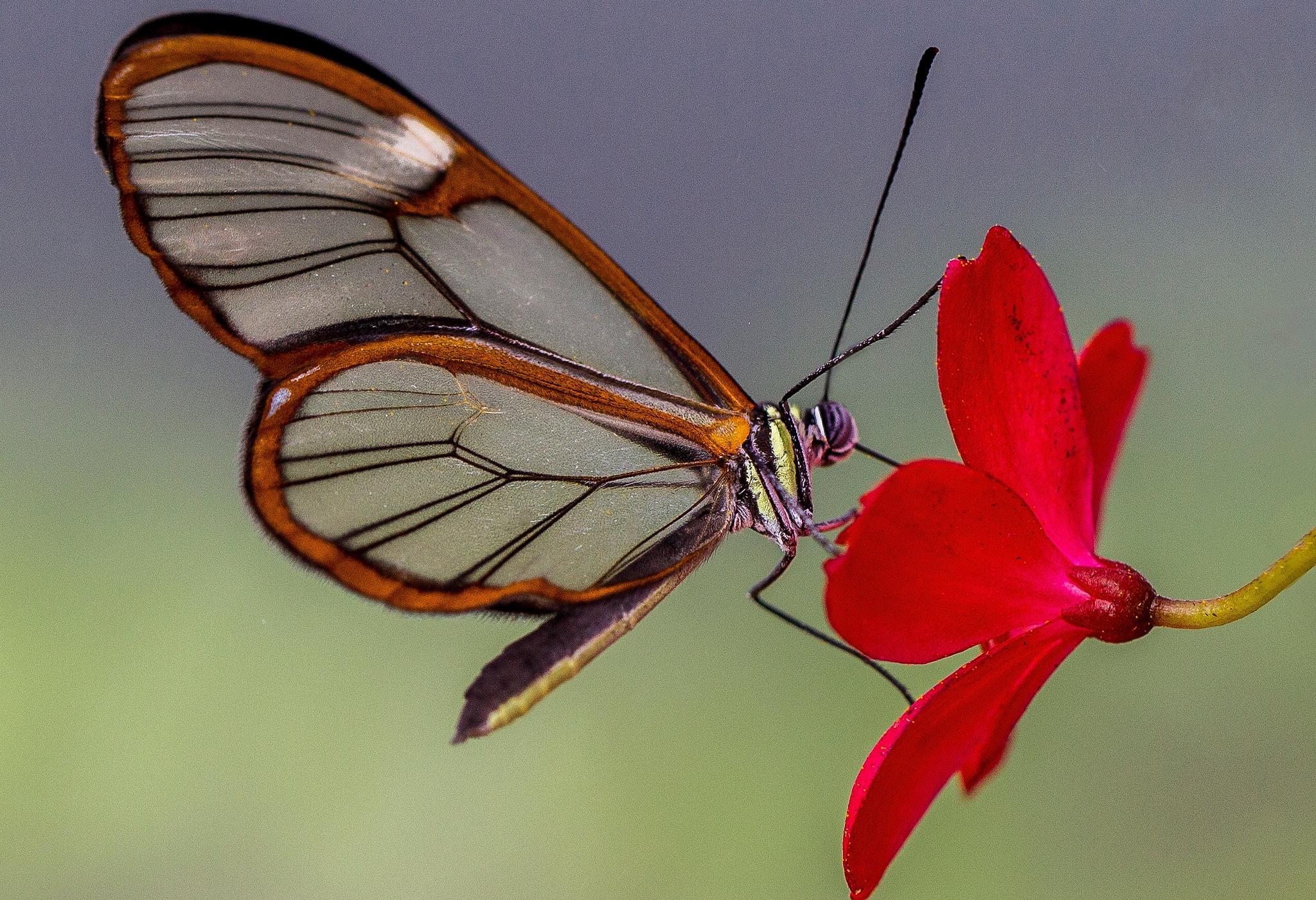 бабочки из лепестков  № 2303892  скачать