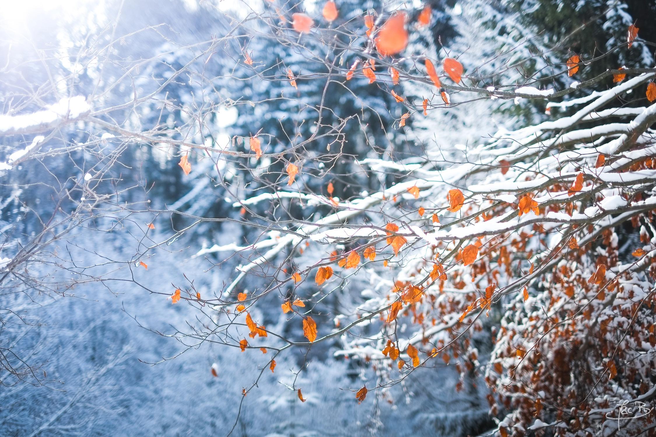 снег ветви лес snow branches forest  № 442785  скачать
