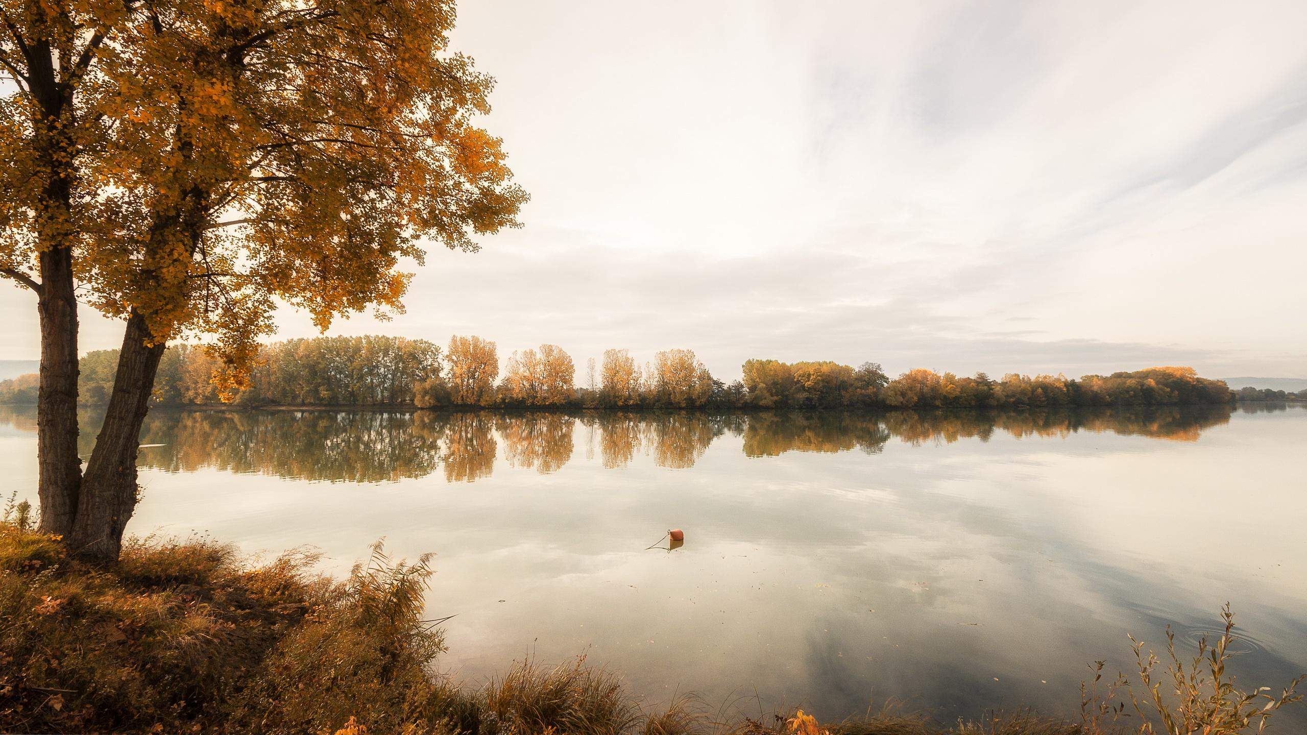 река осень деревья  № 3186340 без смс