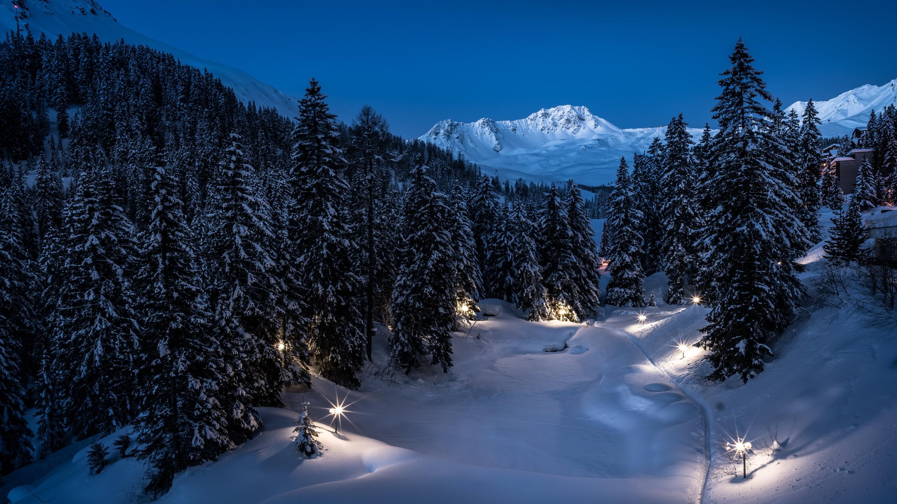обои на рабочий стол зимний лес ночью желания воплотятся