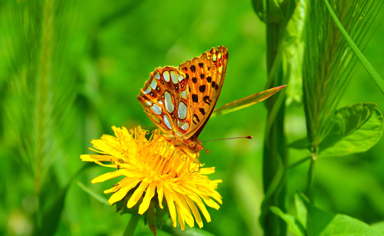 природа макро бабочка цветы желтые  № 1238560  скачать