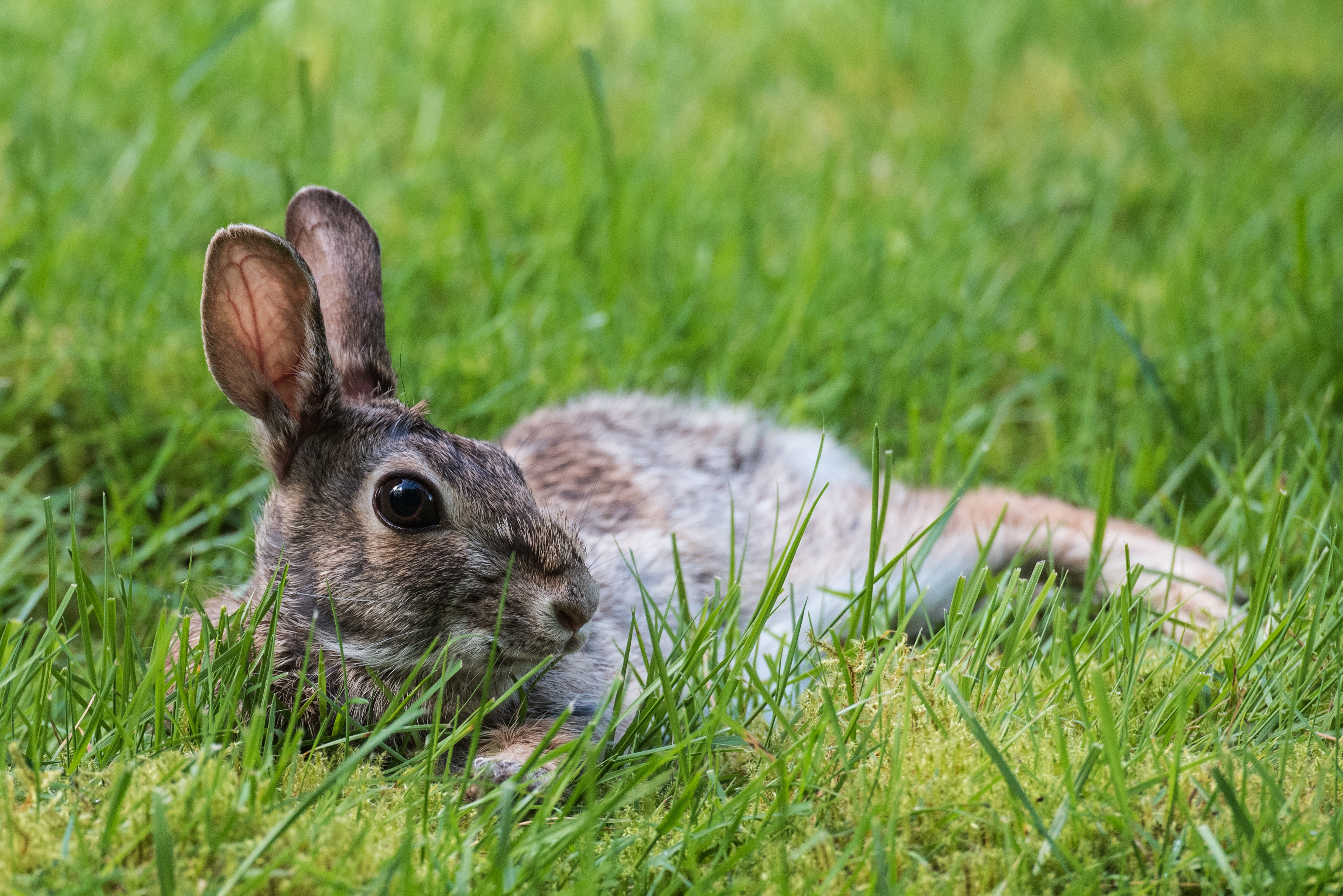 природа животные заяц nature animals hare  № 103308 загрузить