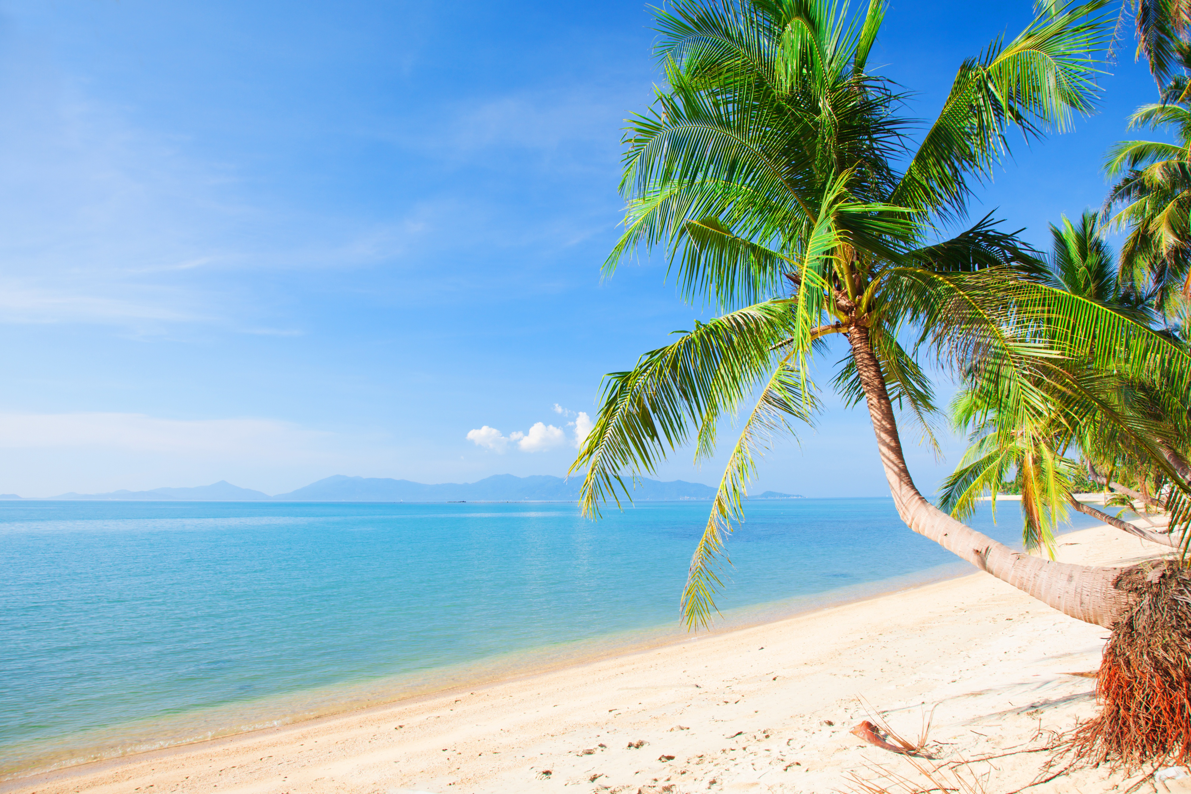 берег пальма море солнце пляж  № 3779874 бесплатно