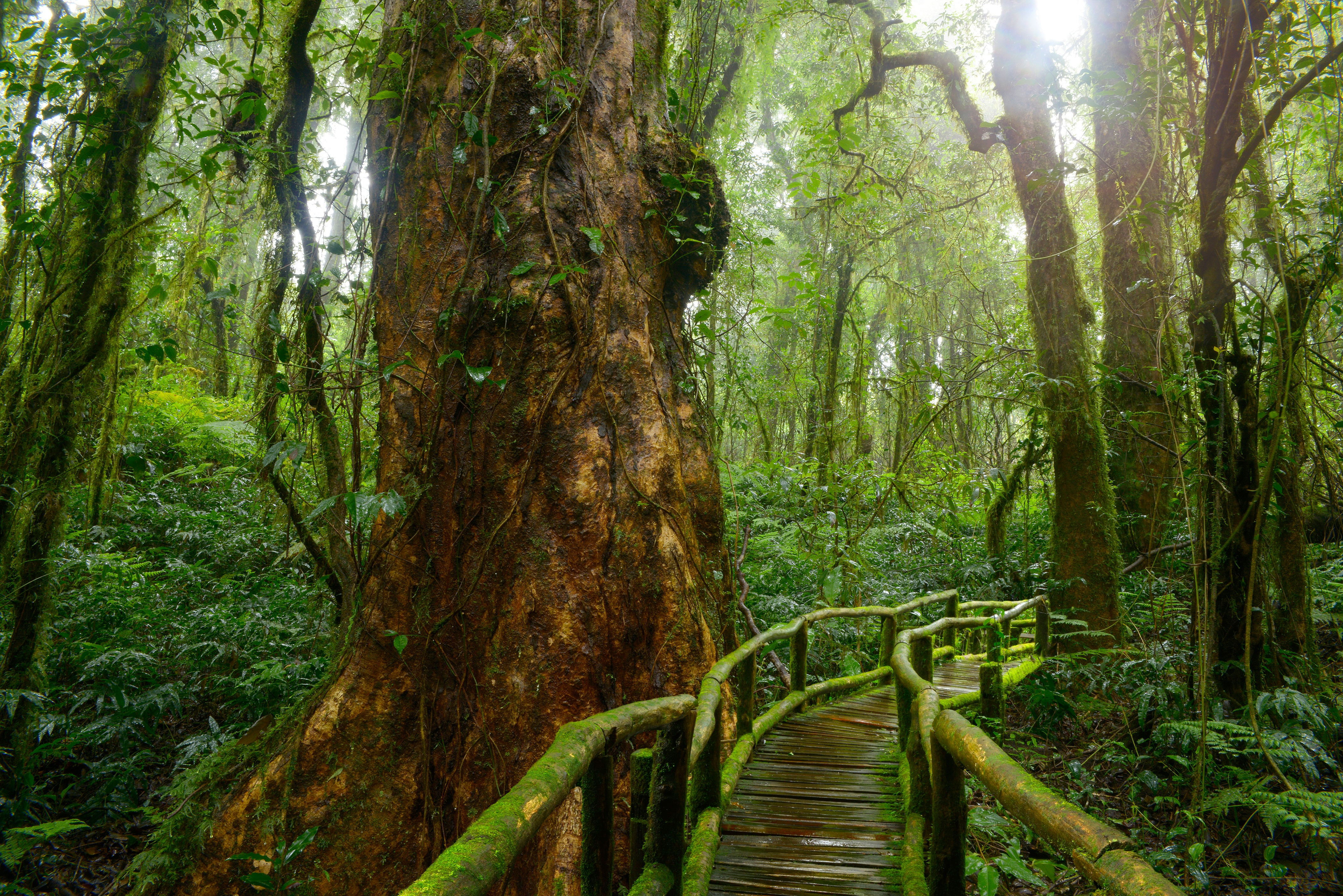 lo rewilding trees forests - HD4252×2838