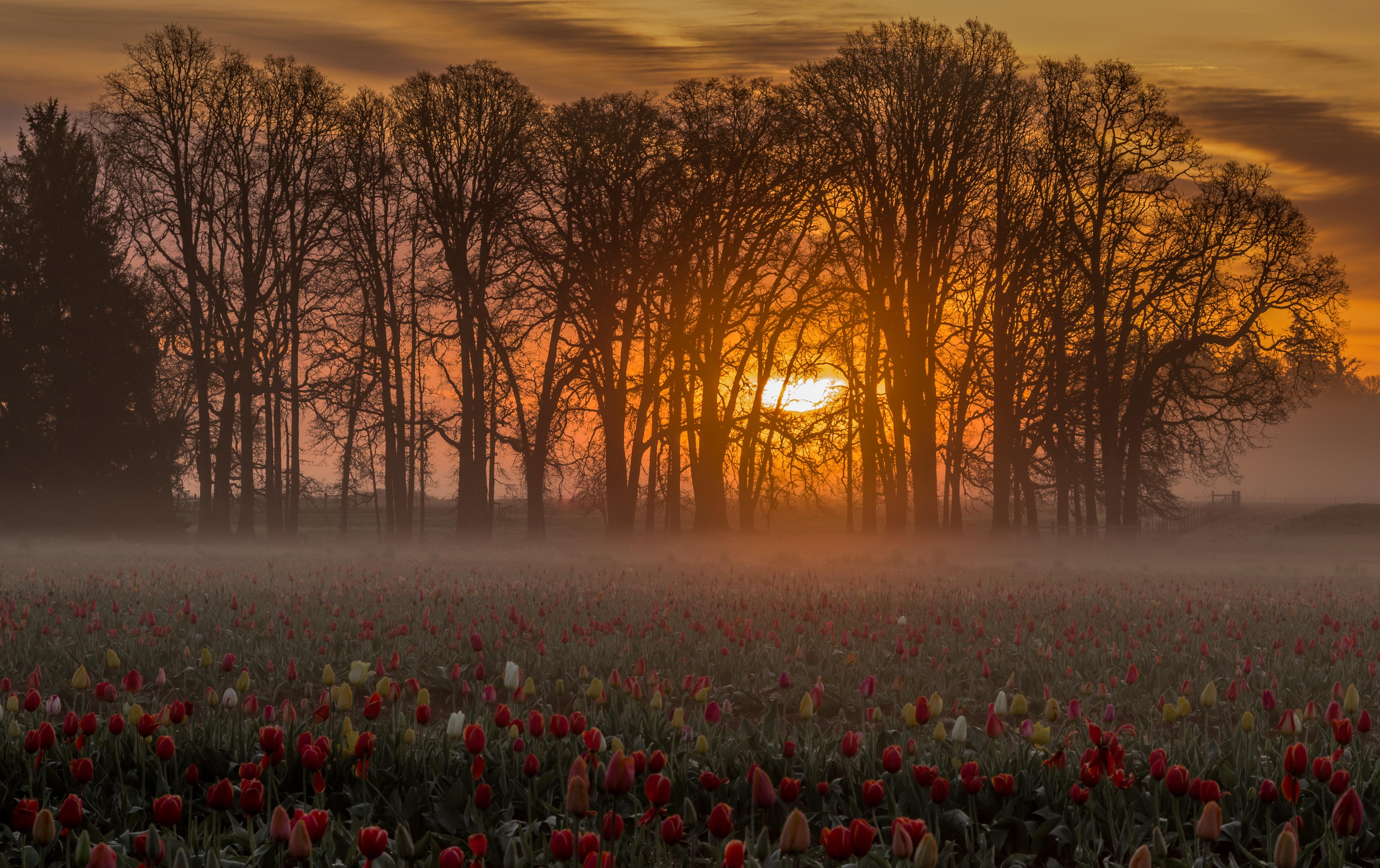 поле цветы рассвет field flowers dawn  № 3837055 загрузить