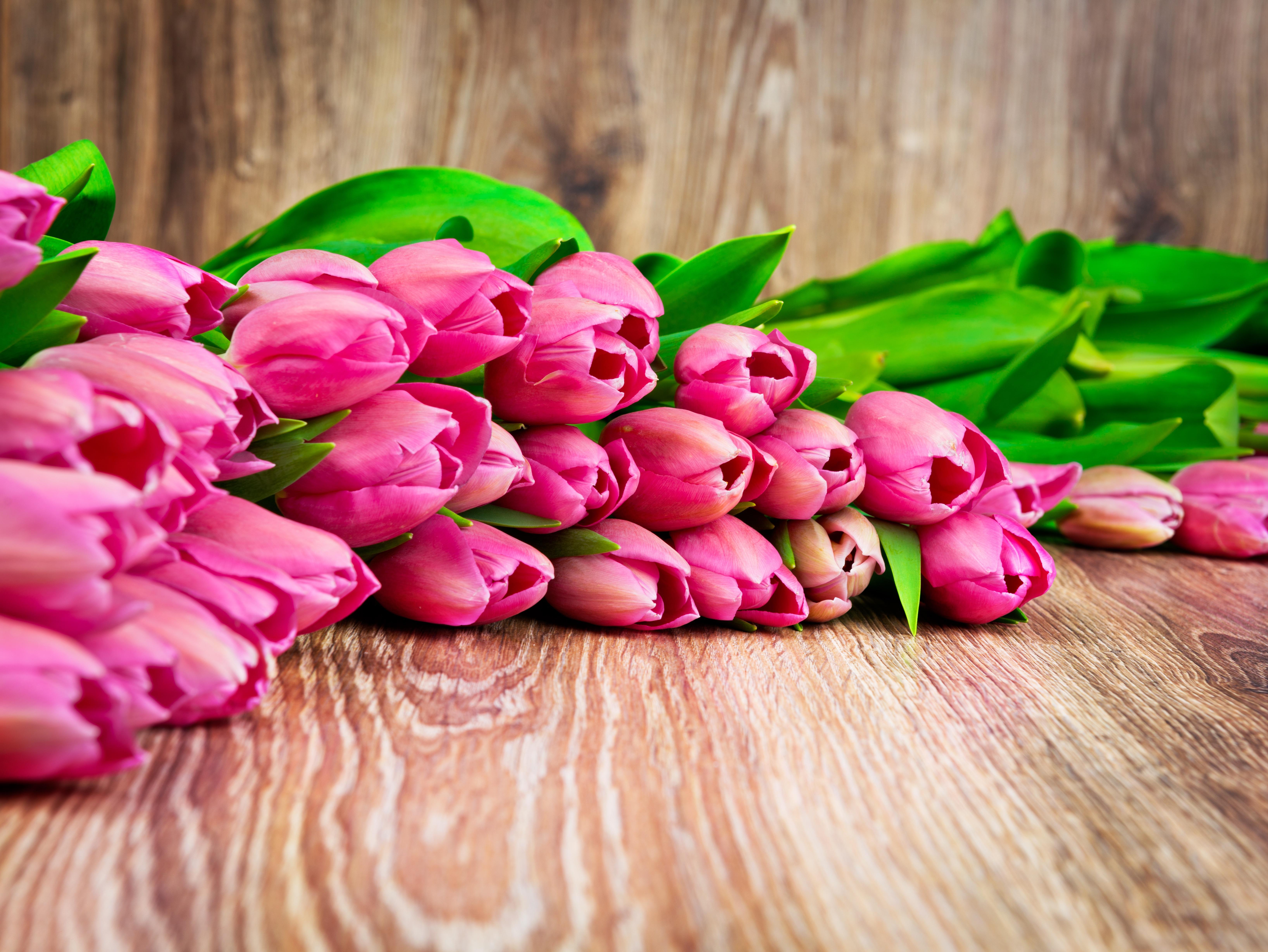 букет,тюльпаны,листья  № 415736  скачать