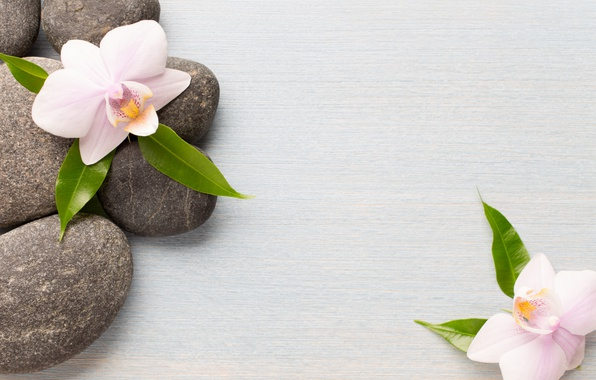 Picture stones, Orchid, flowers, orchid, spa