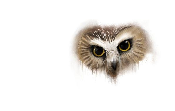 Picture owl, art, Animals, Sergey Yasnikov