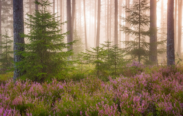 Picture forest, light, flowers, nature, tree