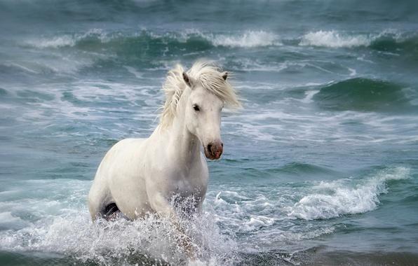 Picture sea, nature, horse