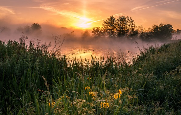 Picture the sky, grass, the sun, clouds, trees, landscape, flowers, nature, fog, lake, pond, dawn, thickets, …