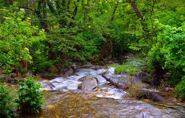 Picture Stream, Spring, Forest, River, Spring, River, Forest, Flow