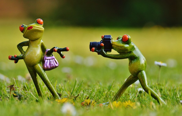 Picture Photo, Frog, Model, Lady, Posing, Photographer