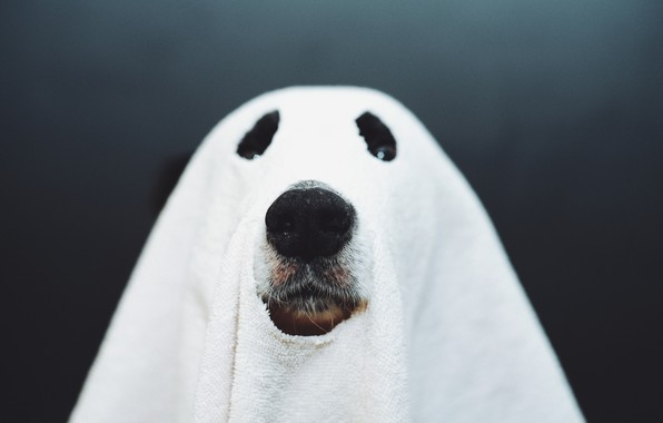 Picture dog, nose, Ghost