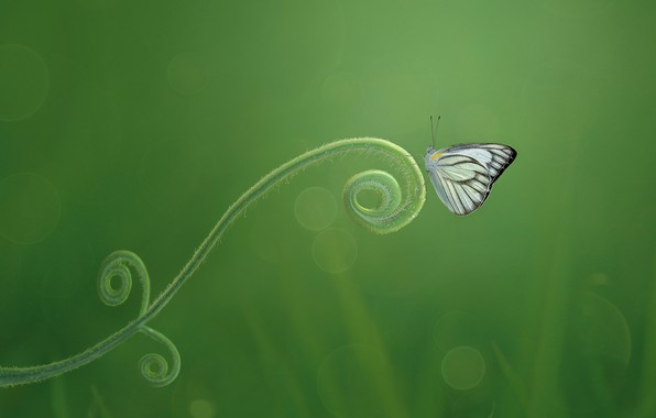 Picture macro, butterfly, green background