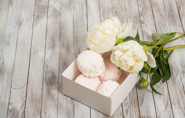 Picture white, flowers, romantic, peonies, marshmallows, peonies, valentine`s day