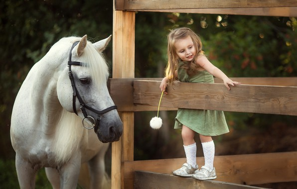 Picture joy, dandelion, horse, the fence, girl