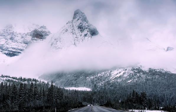 Picture road, forest, mountains, nature, fog