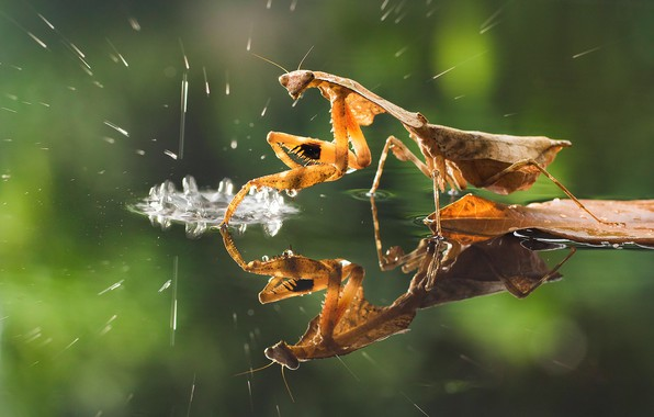 Picture water, drops, macro, squirt, reflection, mantis