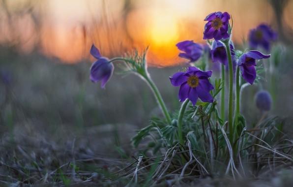 Picture sunset, spring, bokeh, Sleep-grass, Cross