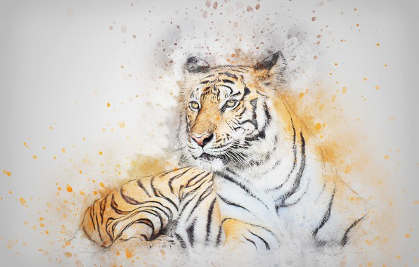 Picture cat, look, tiger, picture, watercolor, lies