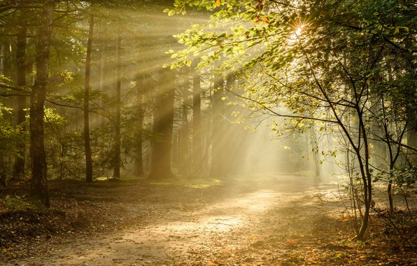 Picture autumn, forest, rays, light, trees, trail, Netherlands, Netherlands, Utrecht, Utrecht