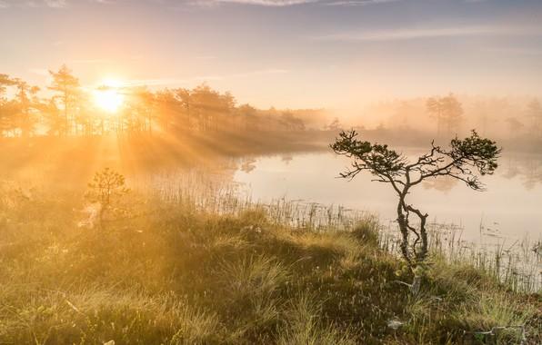 Picture light, fog, lake, morning