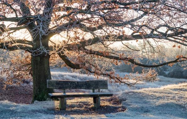 Picture winter, light, Park, bench