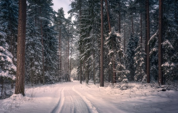Wallpaper Winter Road Forest Snow Trees Poland
