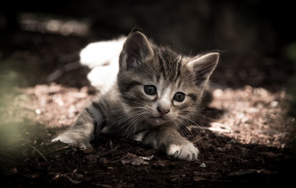 Picture baby, muzzle, kitty, monochrome